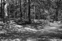 20Westruper Heide
