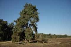 Westruper Heide